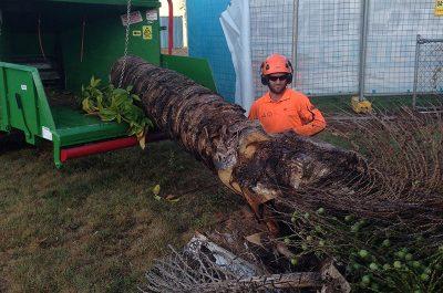 Man Operating Wood Chipper
