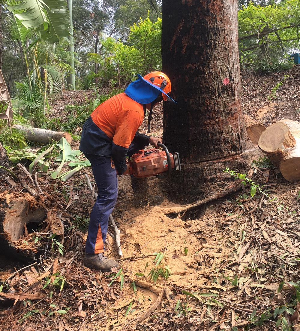 Man Chopping Tree Down