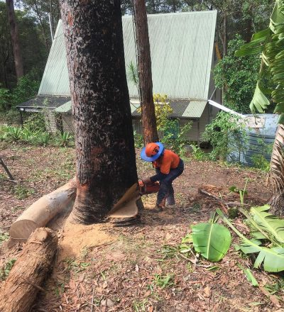 Man Chopping Tree Down