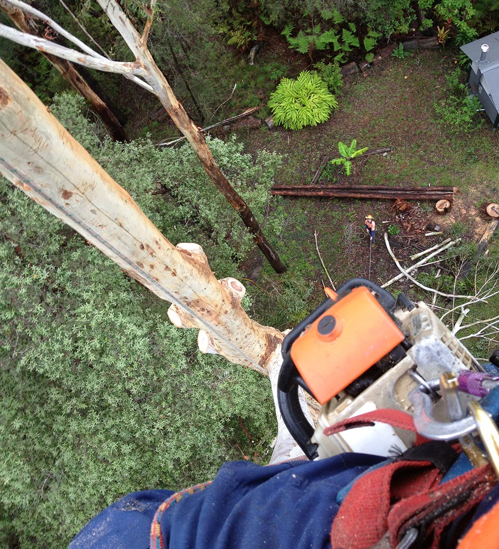 Man in Tree with Chainsaw