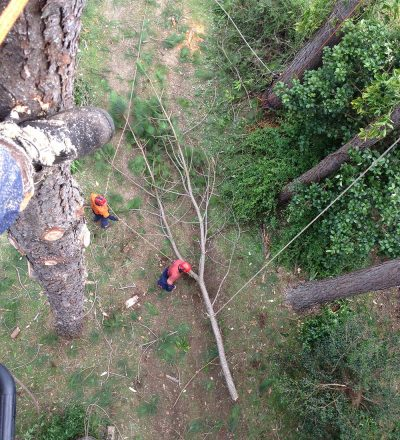 Man in Tree and Ground Crew