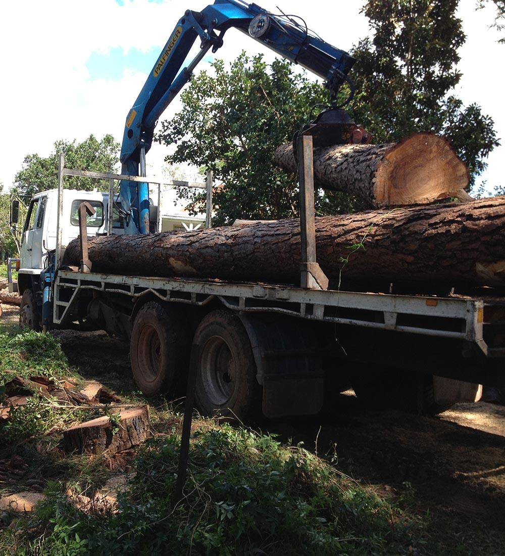Machinery Loading Tree Trunk