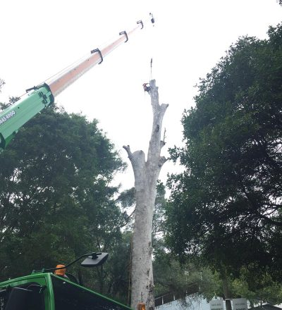 Man in Tree and Crane
