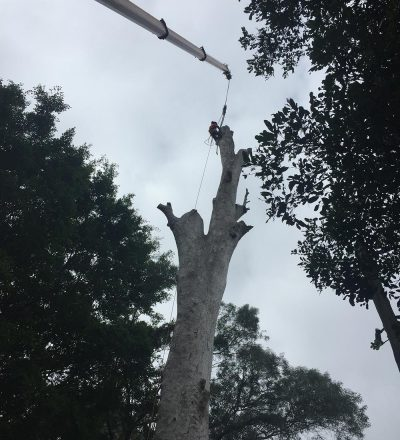 Man in Tree