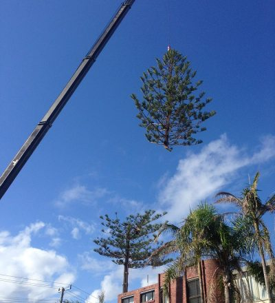 Crane Removing Tree