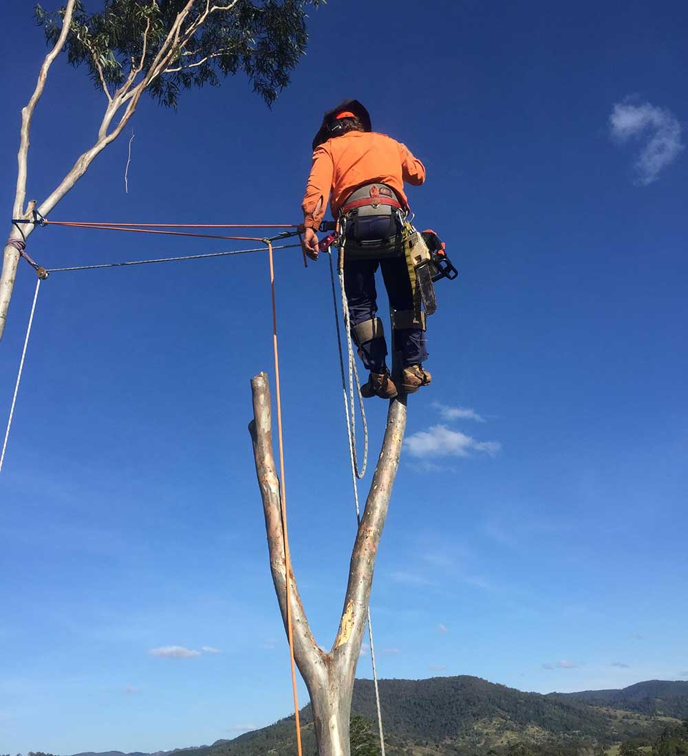 Man in Tree with Ropes